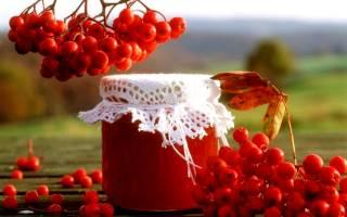 Что приготовить из красной рябины