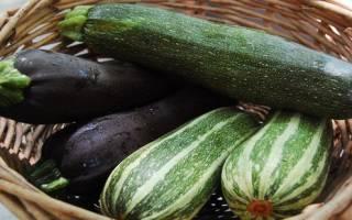 Кабачки на пару в мультиварке – рецепт как приготовить